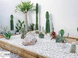 Organize a cactus garden